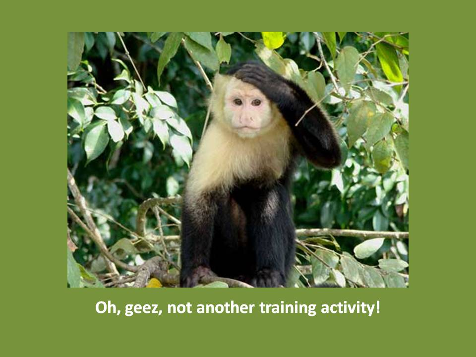 capuchin monkey training
